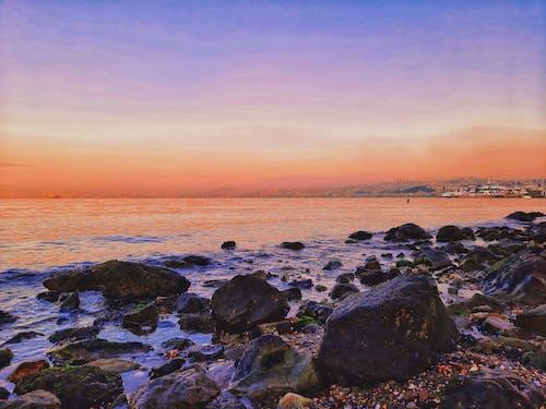 Free stock photo of foodphotography, marine life, offshore