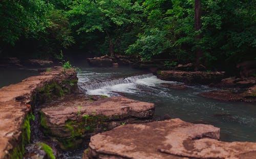 Free stock photo of calm, creek, summer