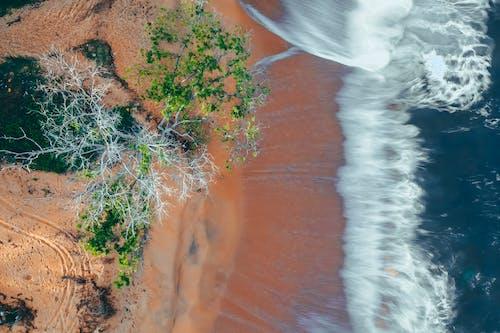 Immagine gratuita di acqua, albero, bagnato