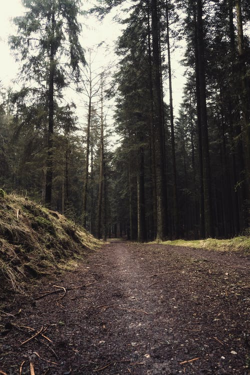 Unpaved Pathway on Forest