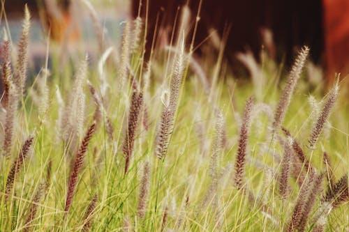 Foto d'estoc gratuïta de bonic, flor, herba, jardí