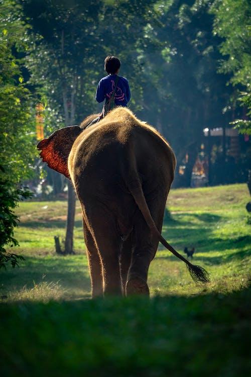 A Person Riding an Elephant