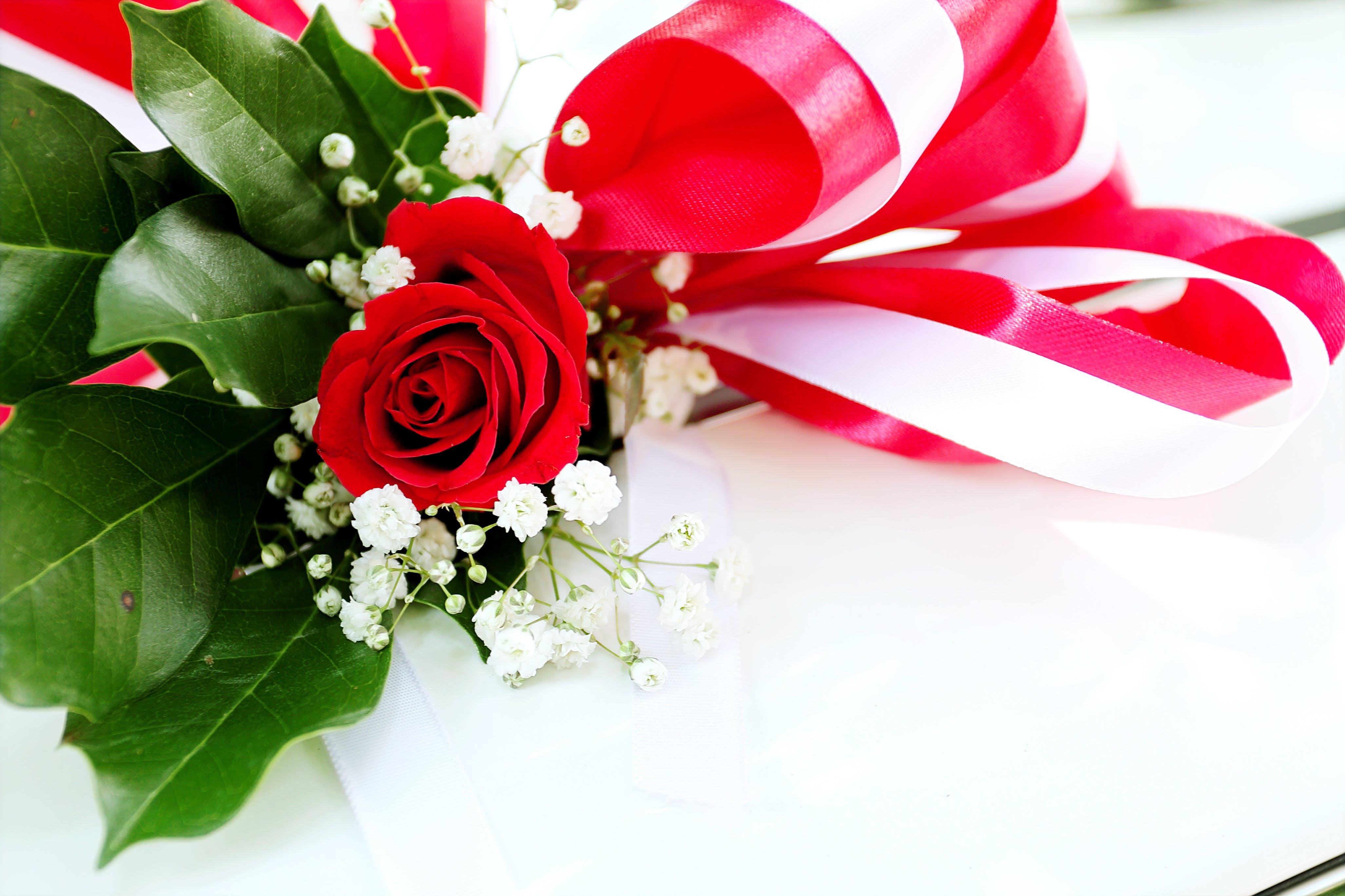 bånd, blomst, blomstrende