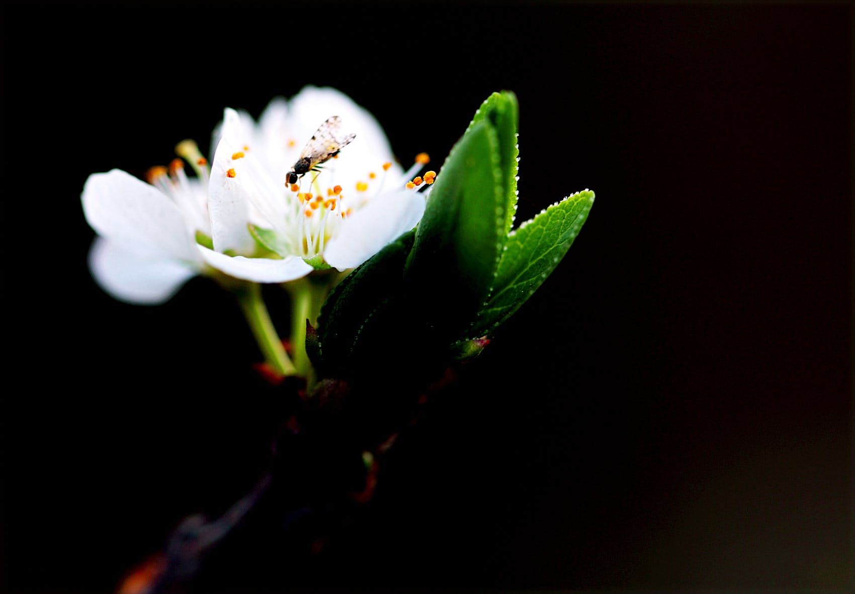 Macro Shot Photography of White Flower