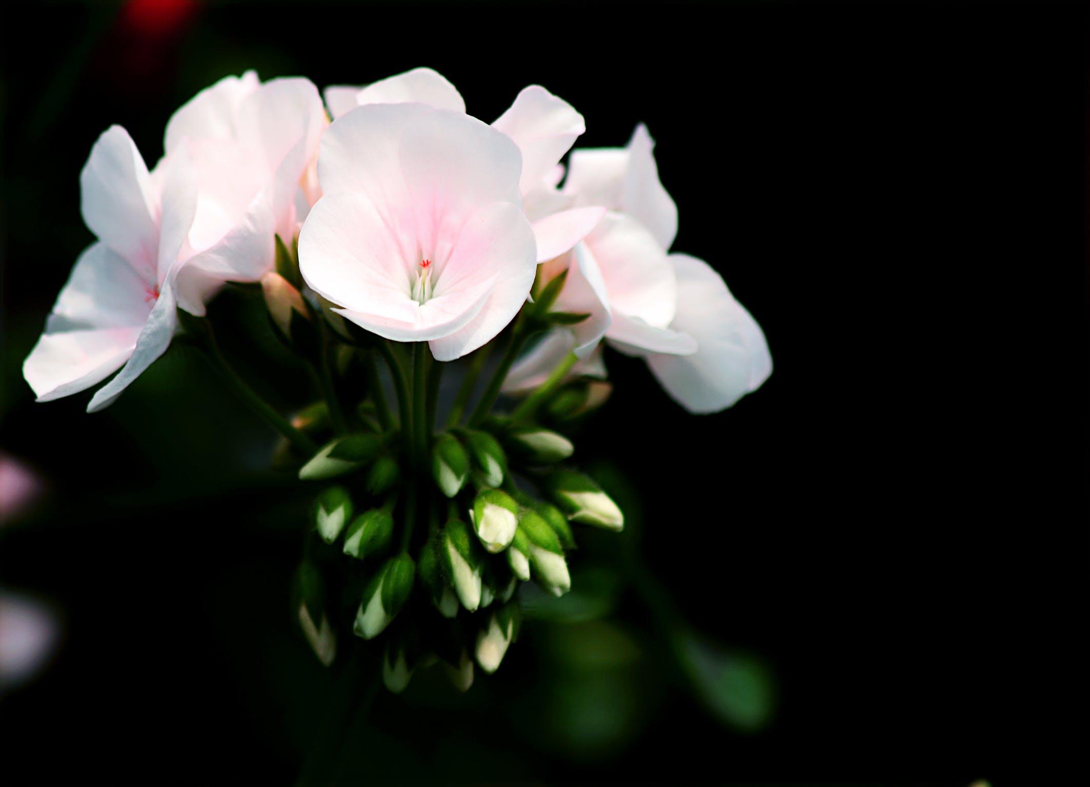 White Petal Flower Selective Focus Photography