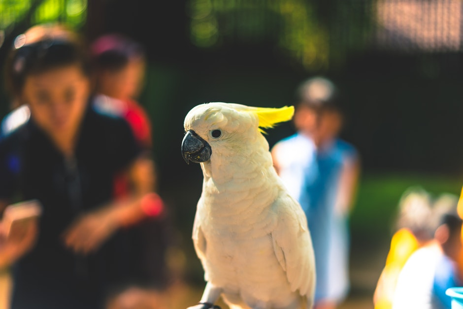 Close Up Photography of Yellow Parrot