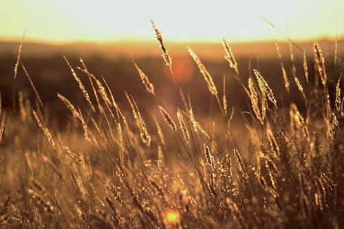 Free stock photo of africa, dry grass, evening sun