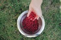 red, summer, berries