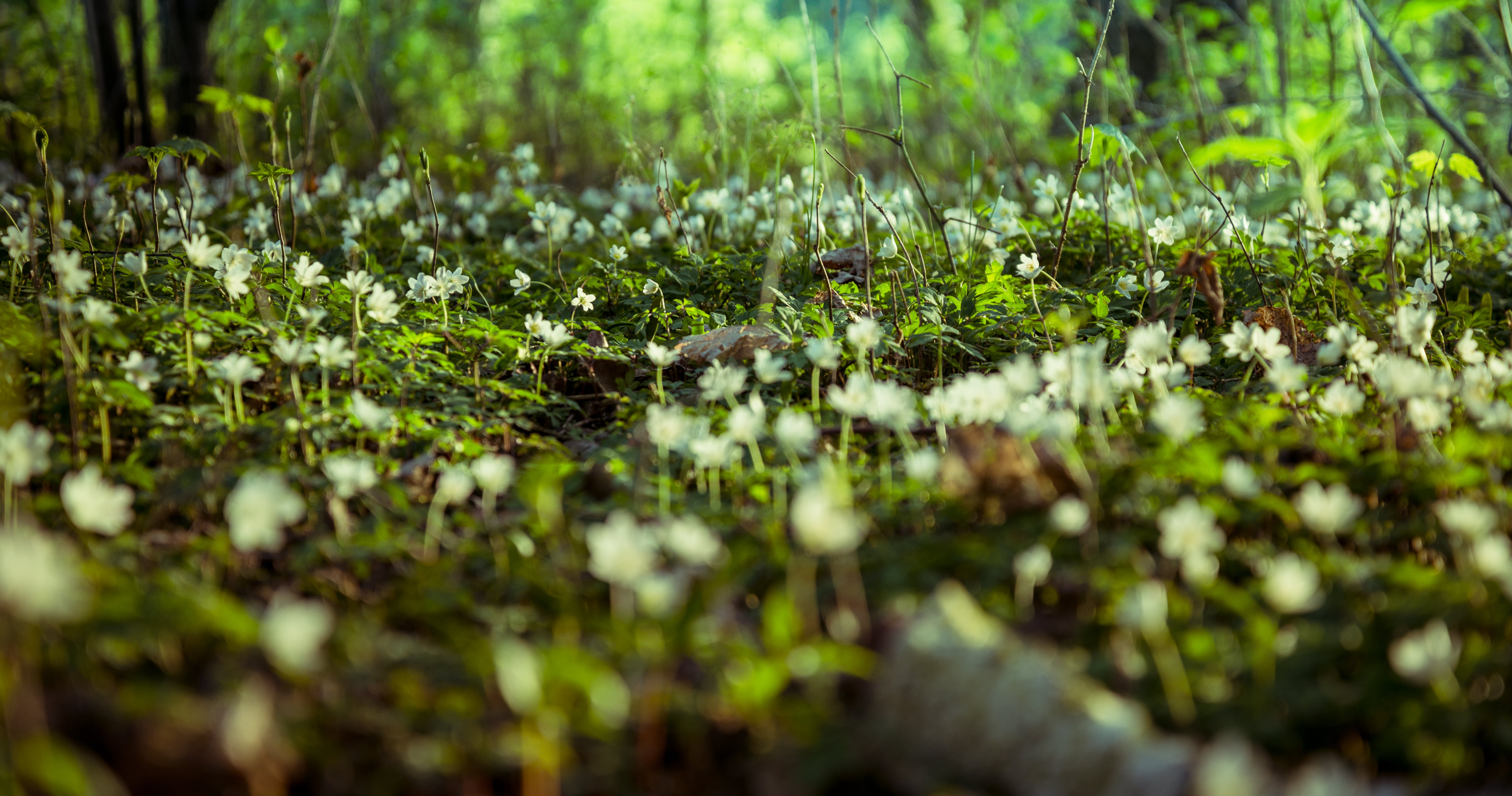 Free stock photo of background, beautiful flowers, forest, ground
