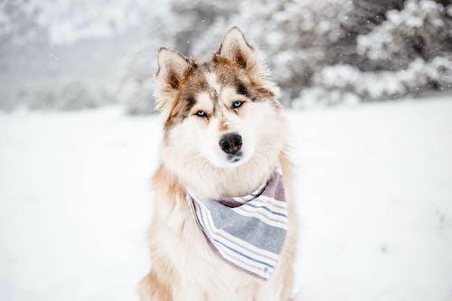 Fotos de stock gratuitas de animal, canino, frío