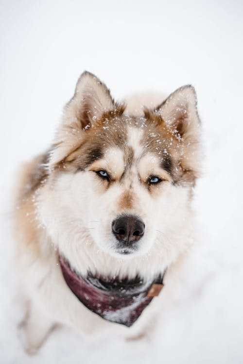 Fotos de stock gratuitas de animal, canino, escarchado