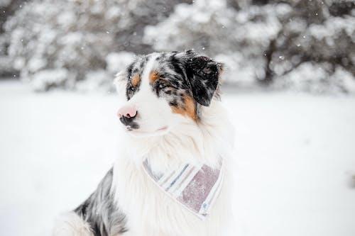 Fotos de stock gratuitas de animal, canino, estudio