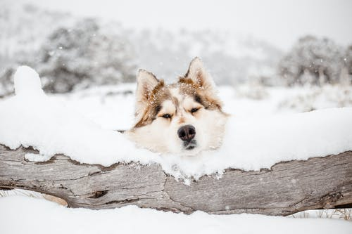 Fotos de stock gratuitas de al aire libre, animal, árbol