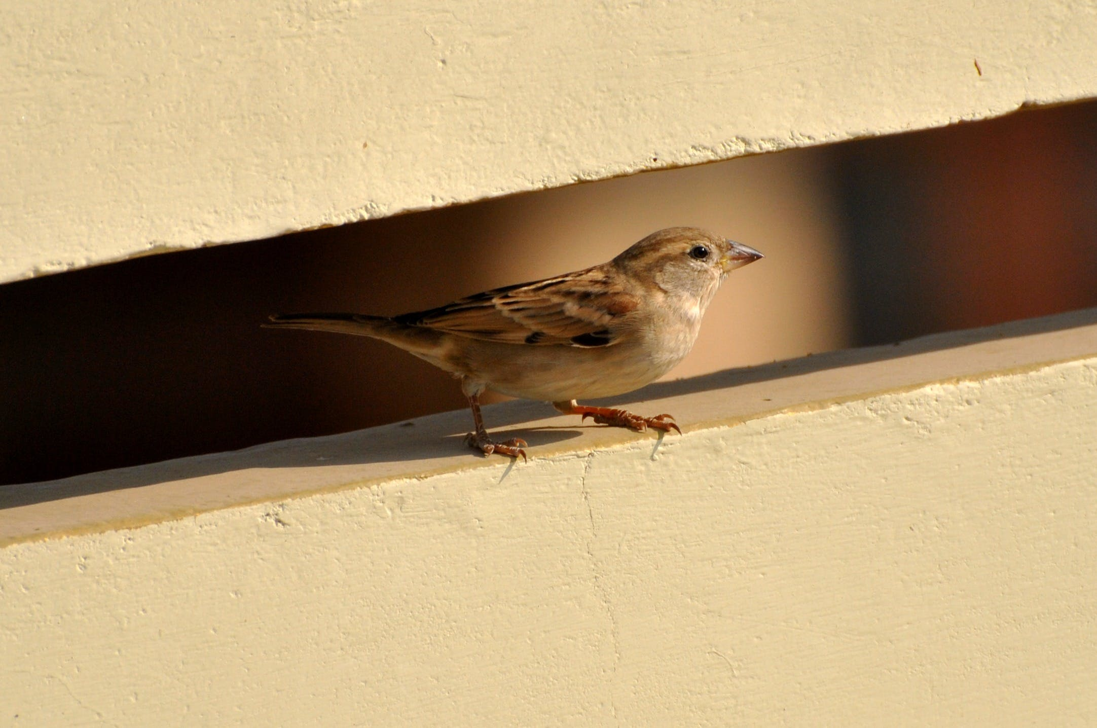 Brown and White Bird on White Wall Paint
