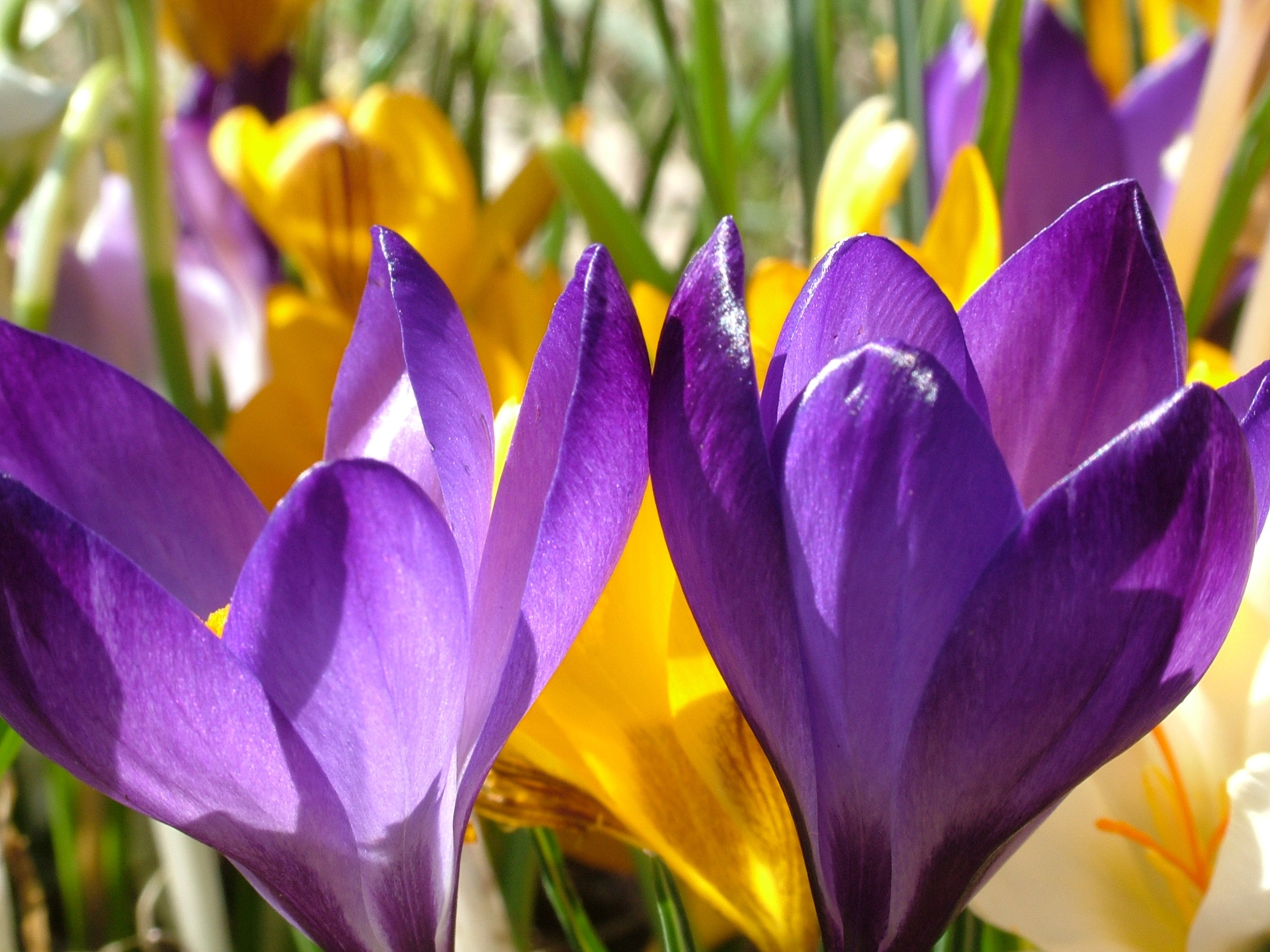 Purple Flower And Yellow Flower During Daytime In Close Photography