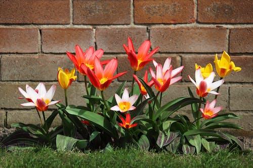 Foto profissional grátis de broto, cheio de cor, colorido, flora