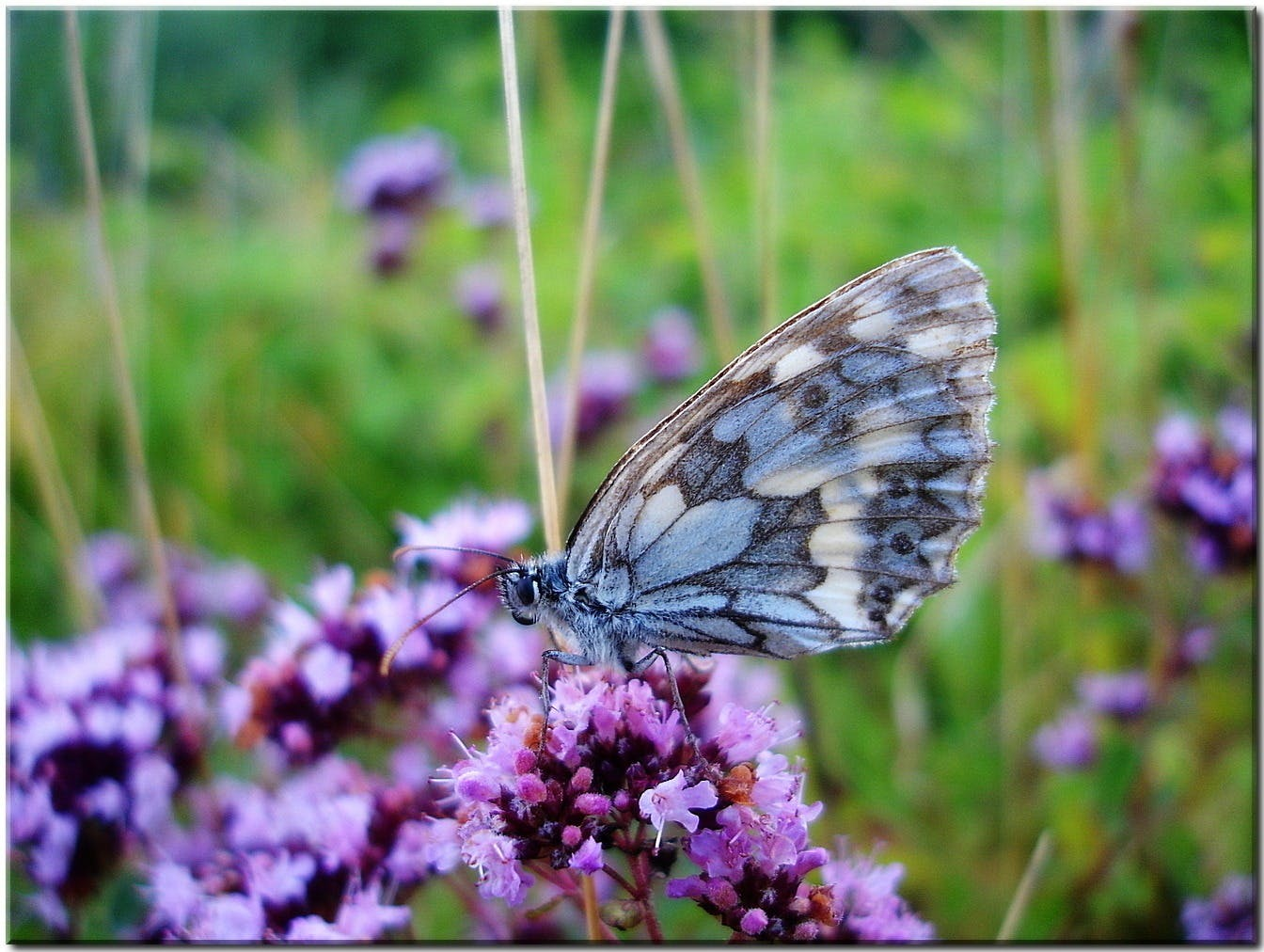 Grey and Blue Butterfly on Purple Flower during Daytime