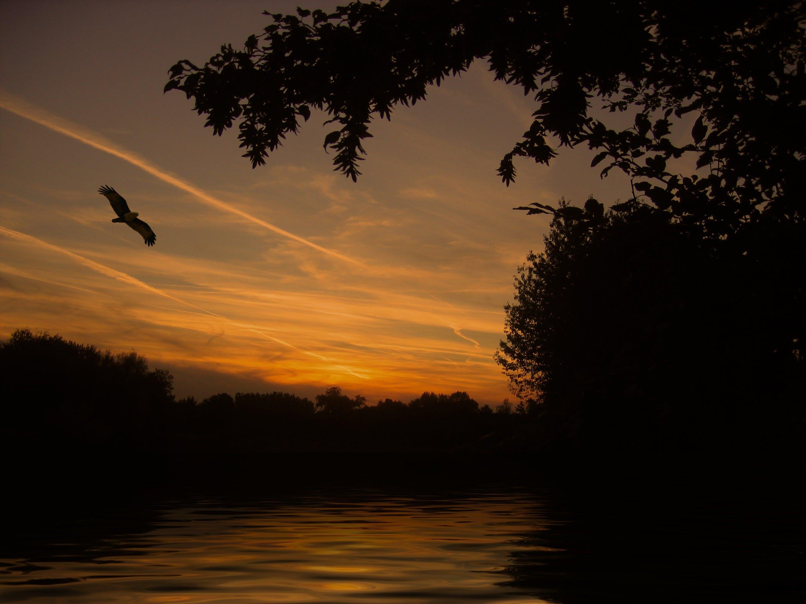 Free stock photo of sky, sunset, bird, water