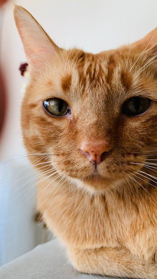 Δωρεάν στοκ φωτογραφιών με αιλουροειδές, γατάκι, γάτες