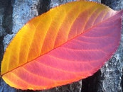 pattern, texture, leaf