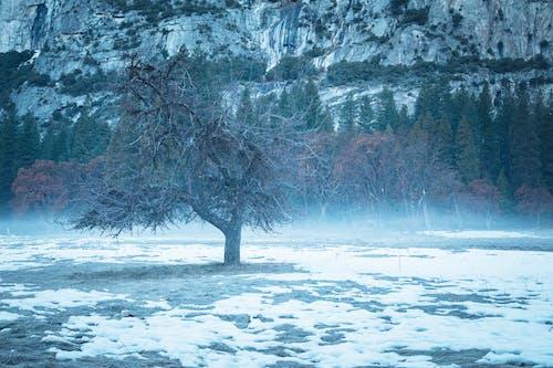 Kostenloses Stock Foto zu baum, bäume, gefroren