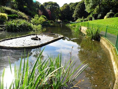 Free stock photo of cloud, english oak, garden pond