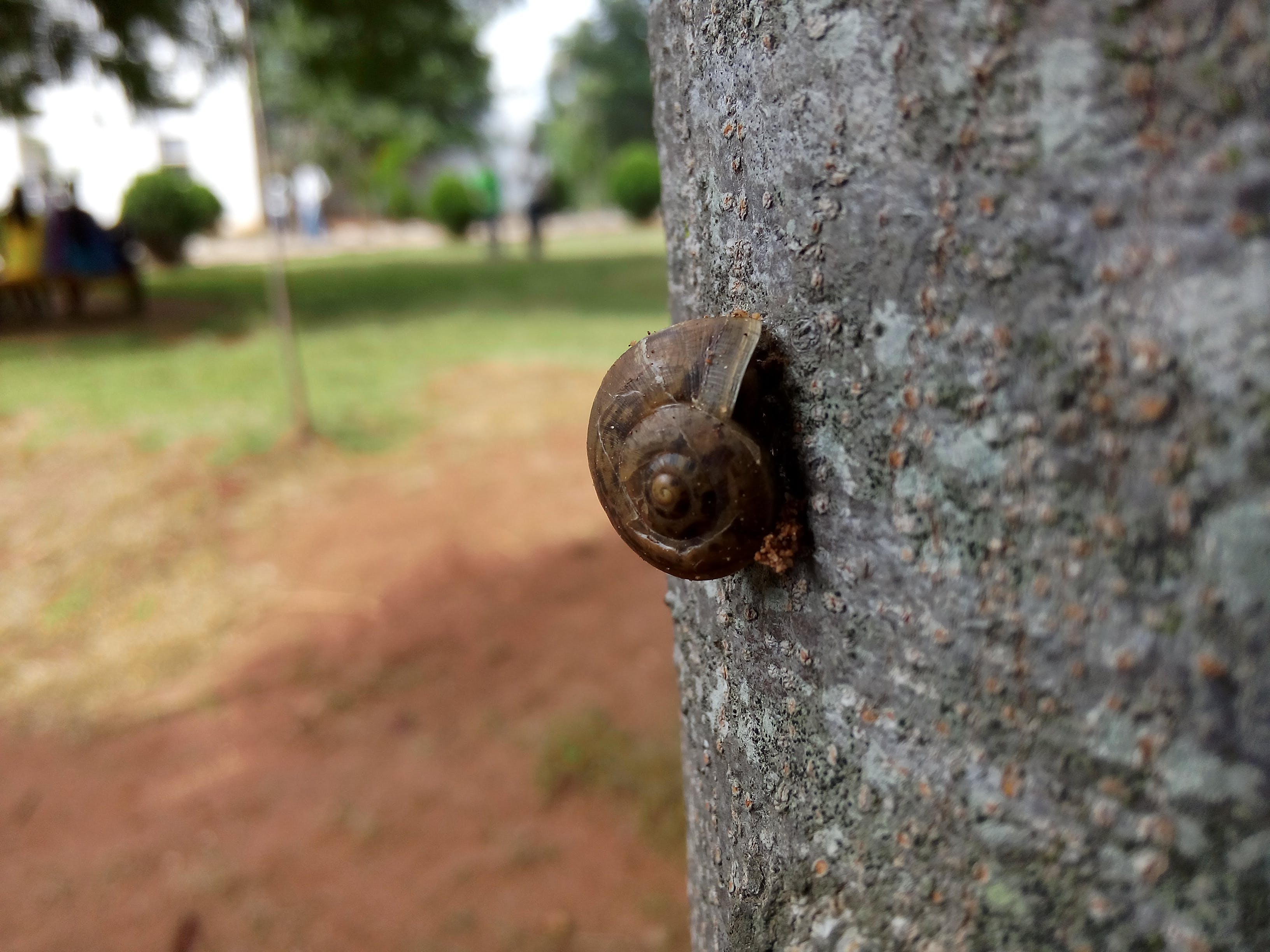 Shallow Focus Photography of Brown Snail on Tree Trunk