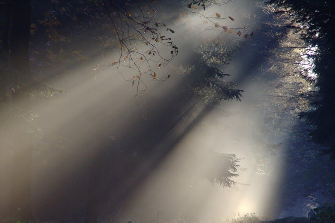 natur, skov, sollys