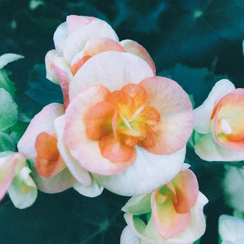 Fotos de stock gratuitas de flor, flores