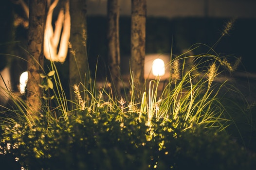 Close-up Photography of Grass at Night