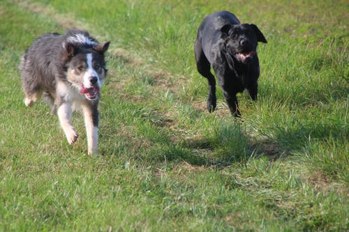 Free stock photo of dog, dogs, fun, meadow