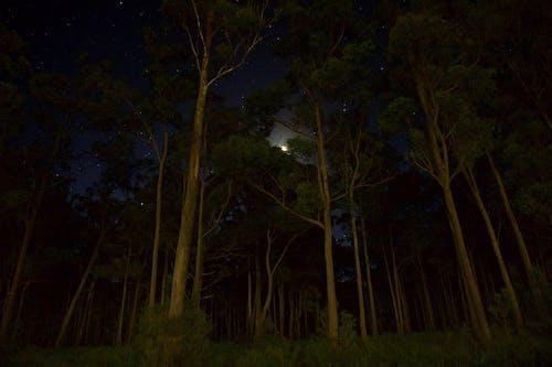 Gratis stockfoto met achtergrondlicht, avond, backlit, bomen