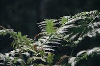 forest, green, hiresolution