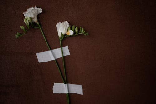 Top view of blooming white flowers with thin stalks and pleasant aroma on brown background with medical patches