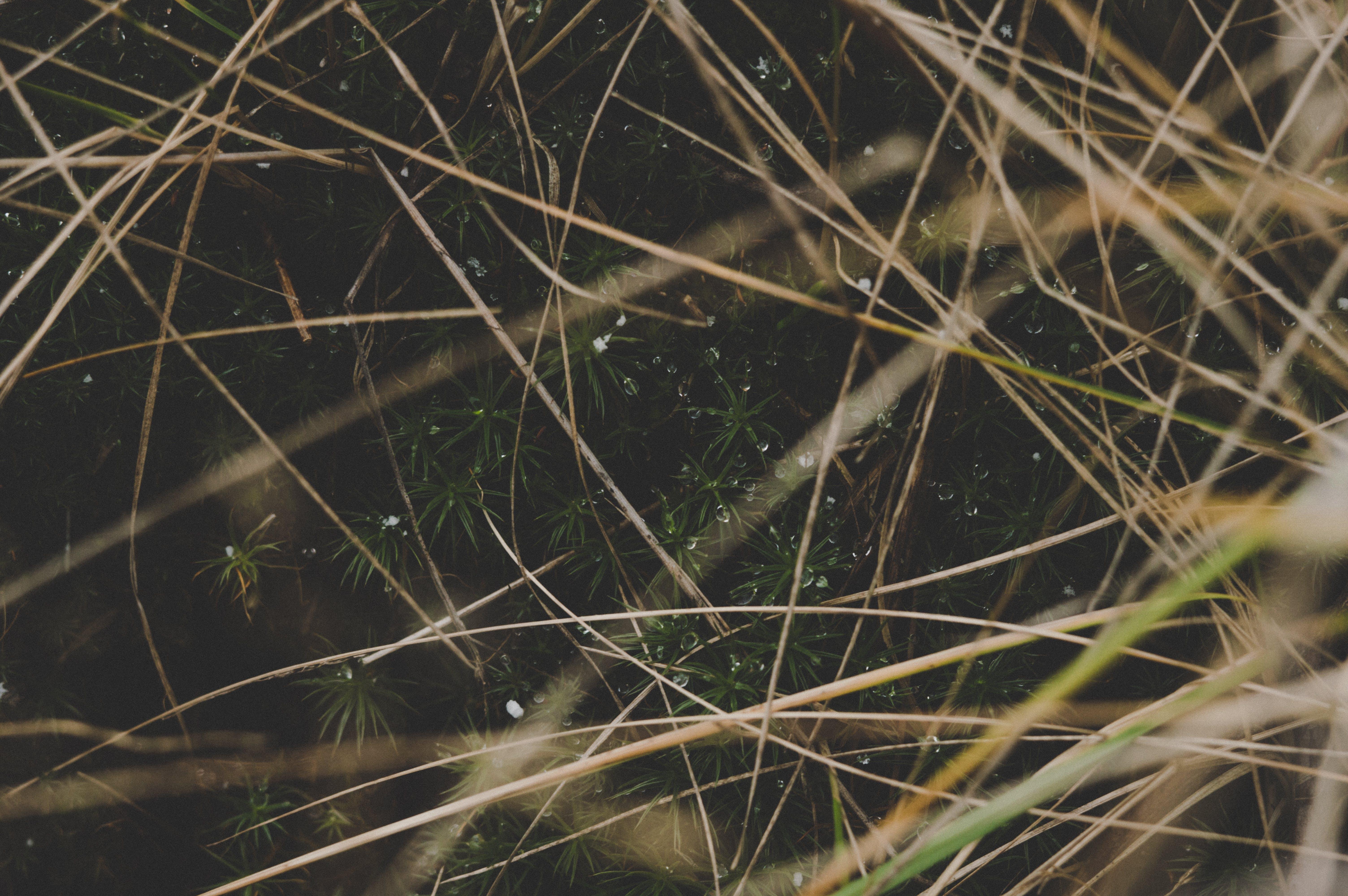 ciemny, flora, krajobraz