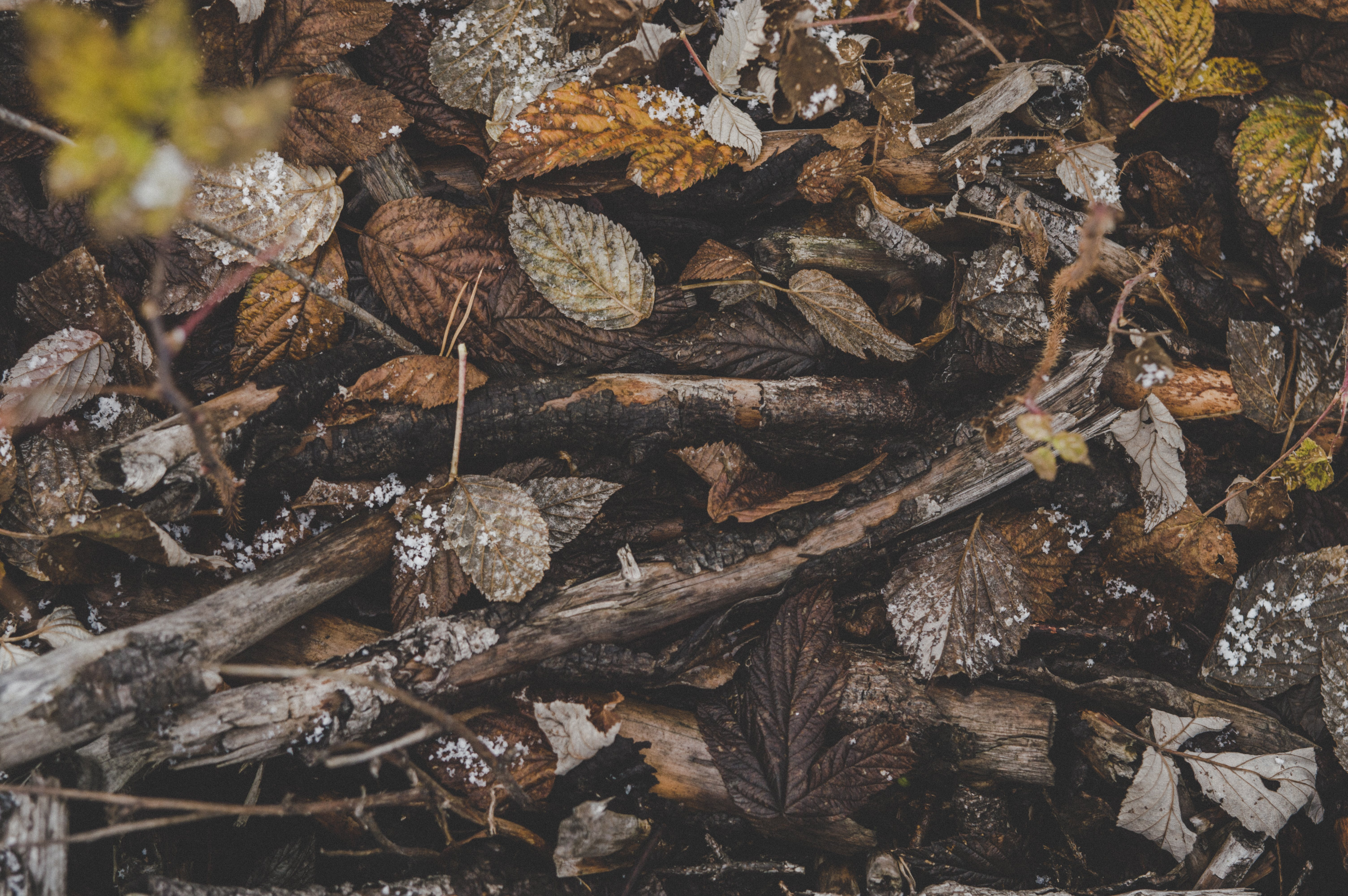 Pile of Brown Tree Branches and Dried Leaves