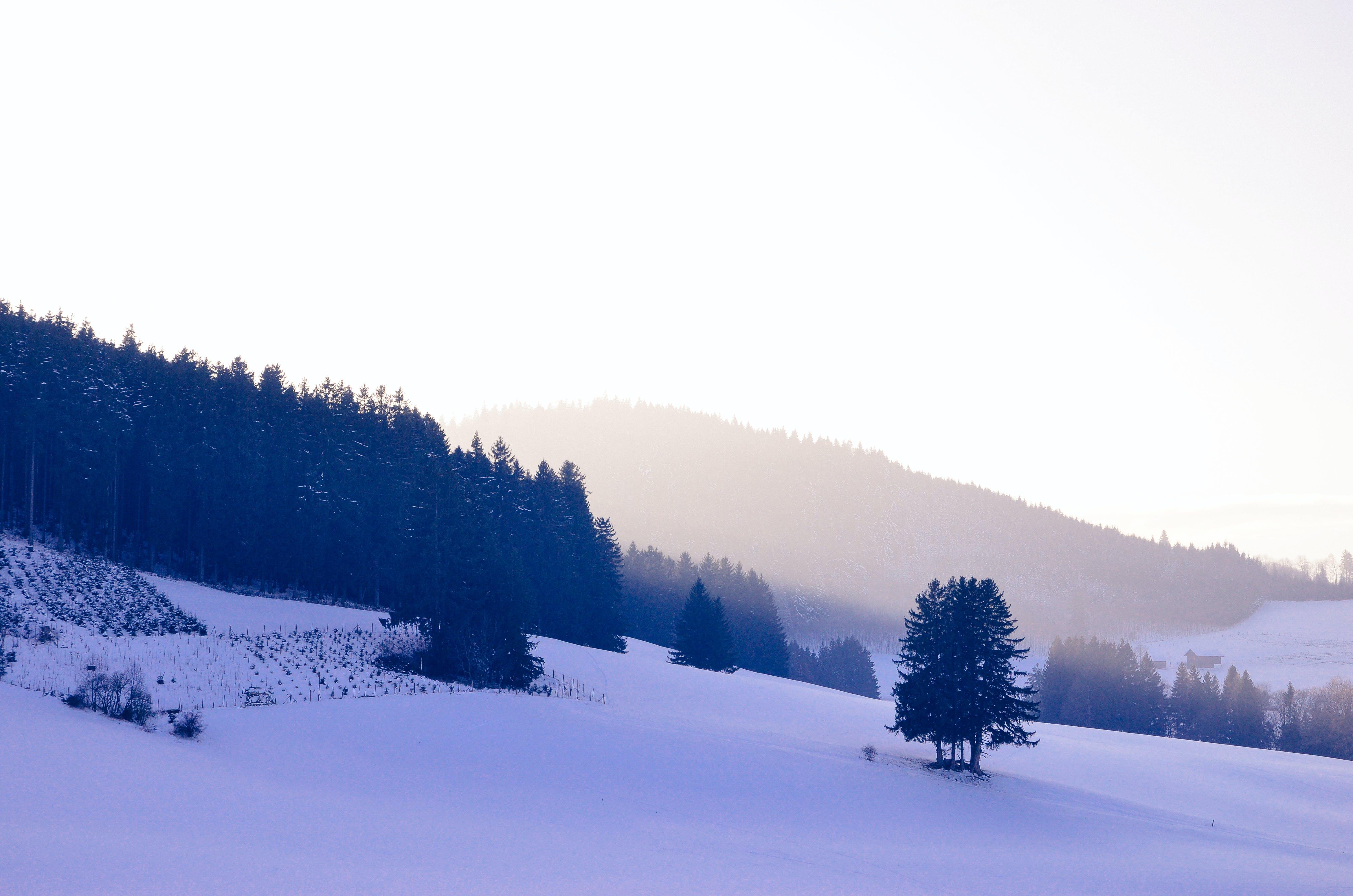 Free stock photo of snow, blue, powder, freshpow