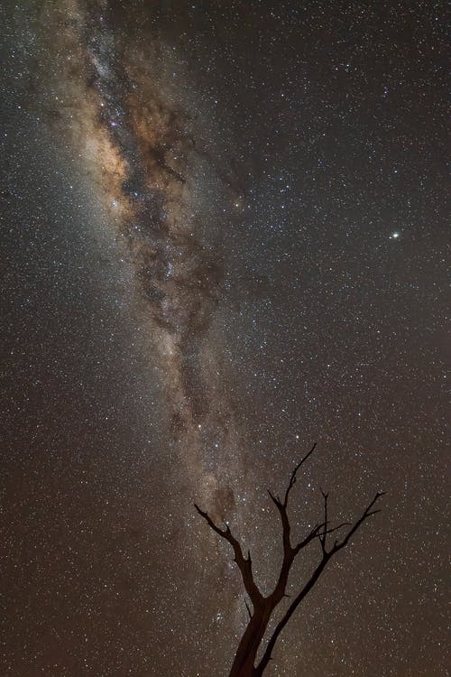 Starry cloudless night sky with shining colorful Milky Way above leafless tree silhouette