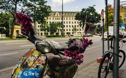 Ảnh lưu trữ miễn phí về hoa, màu sắc, moto, nghệ thuật