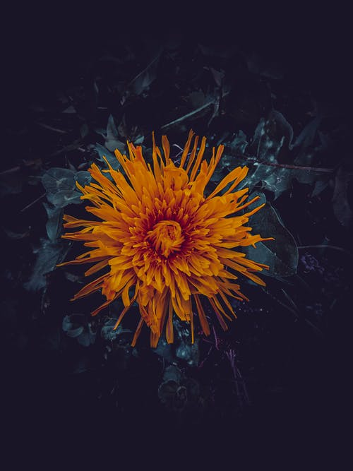 Free stock photo of colorful, dark background, field flower