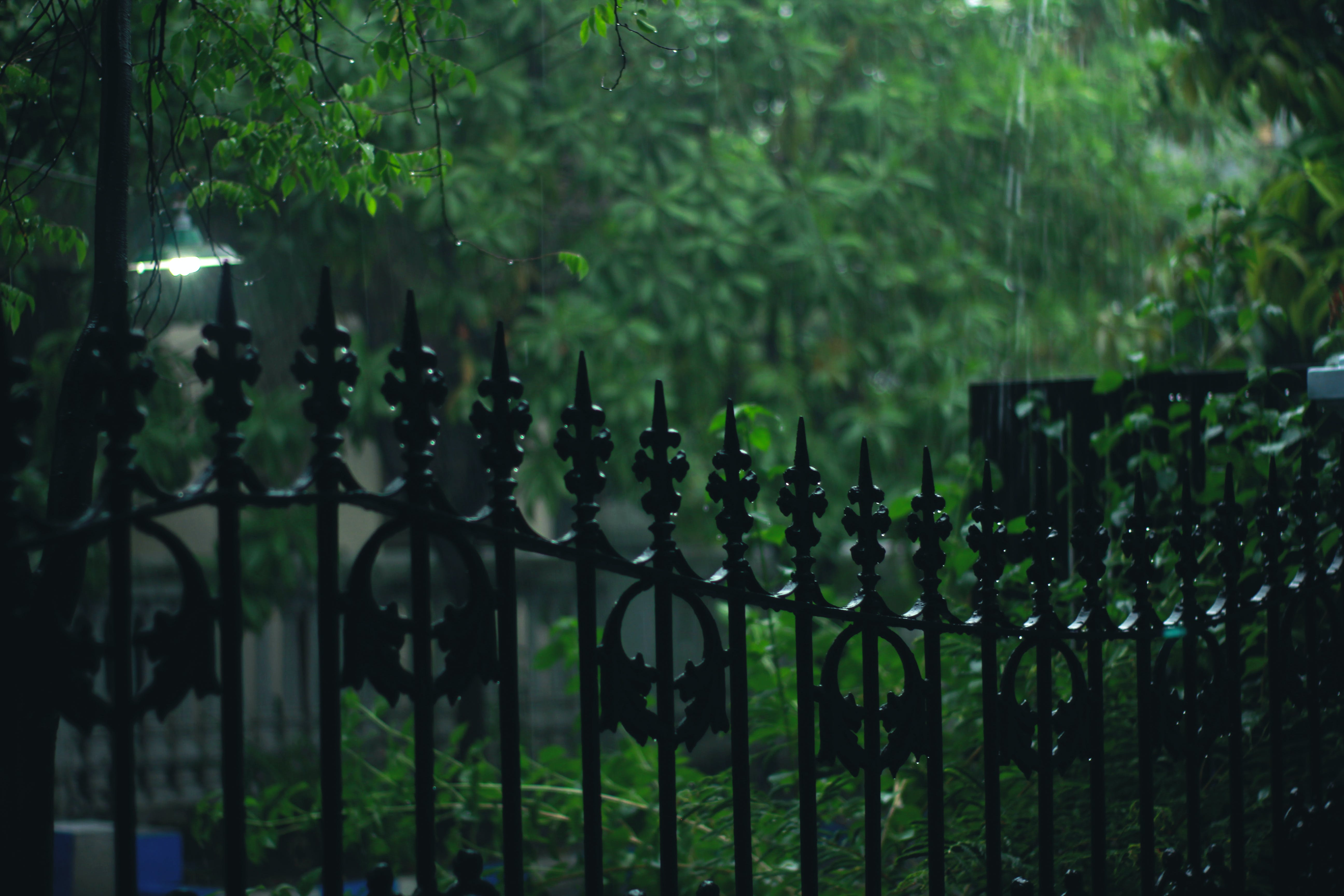 Black Metal Gate With Bamboo Grasses Outside