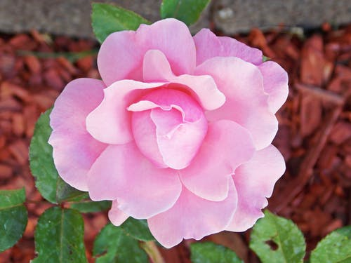 Imagine de stoc gratuită din floare, grădină