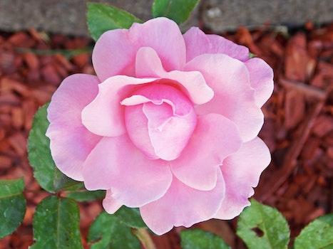 Free stock photo of garden, flower