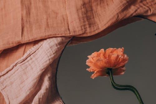 Orange Flower on Black Surface