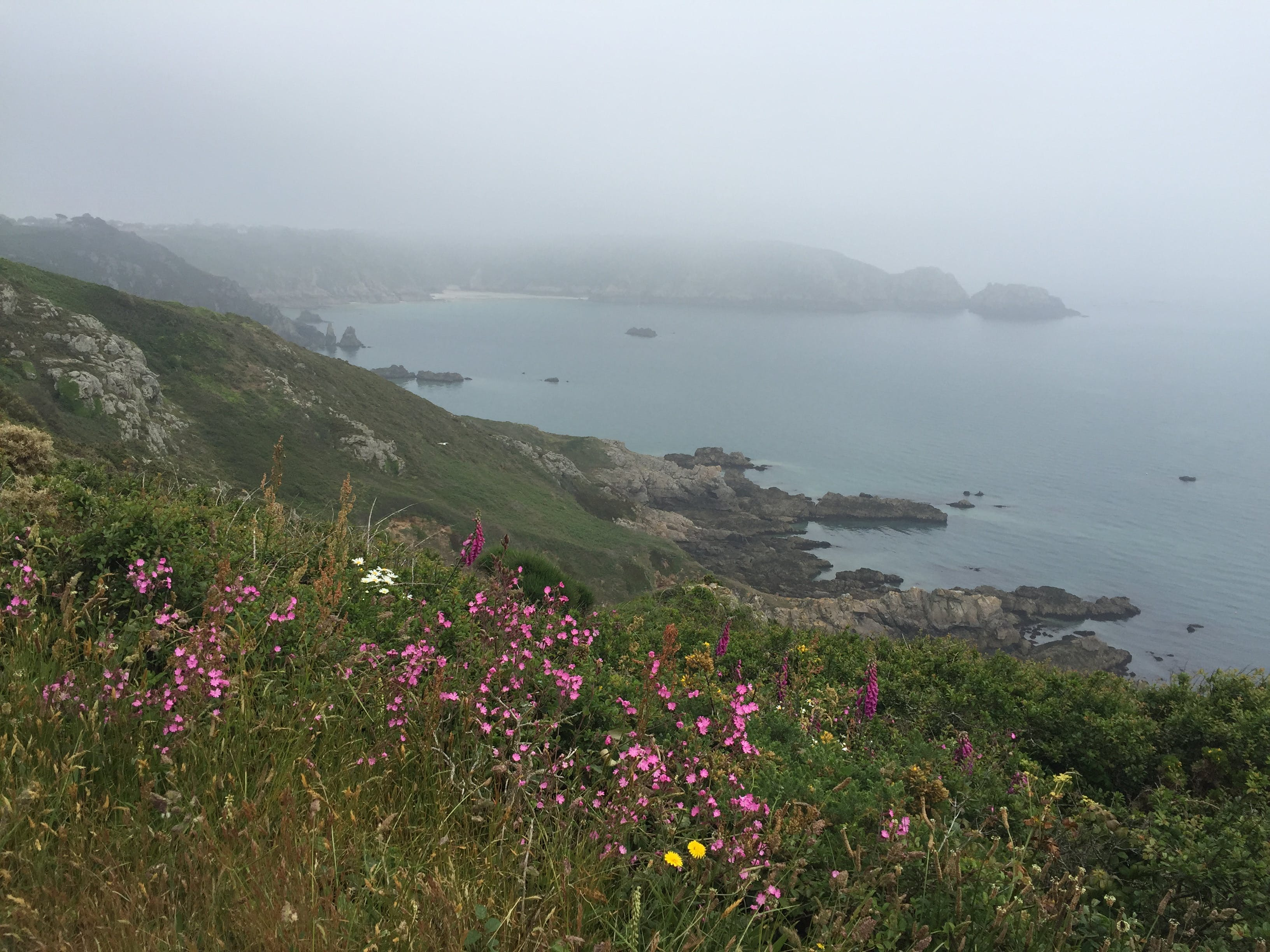 Free stock photo of beautiful flowers, channel islands, cliff coast, cliffs