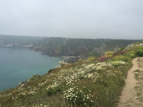 Free stock photo of cliff side, cliffs, flowers, the sea