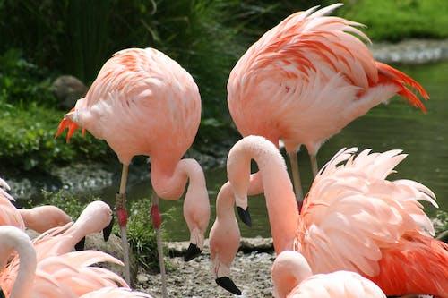 Close-Up Photo of a Flock of Pink Flamingos