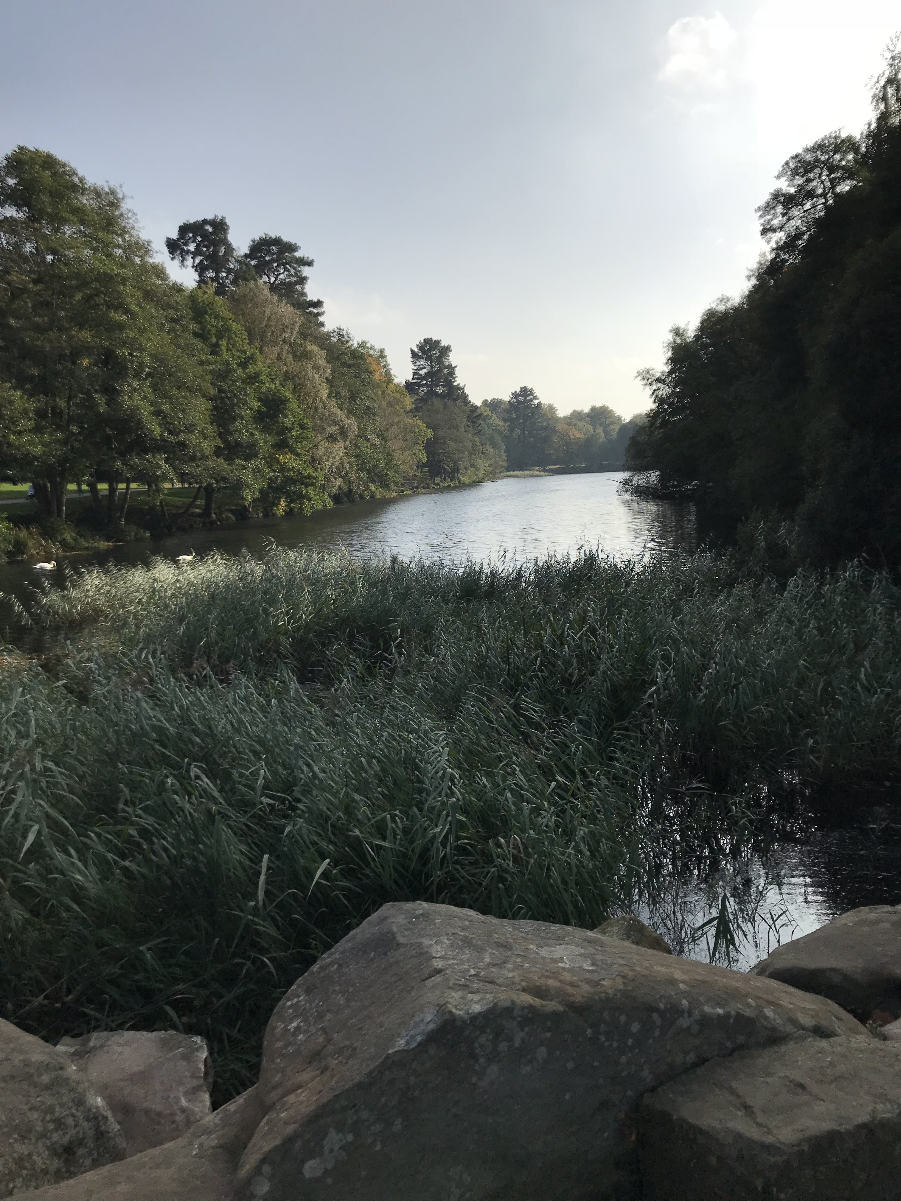 Free stock photo of lake, sky, trees