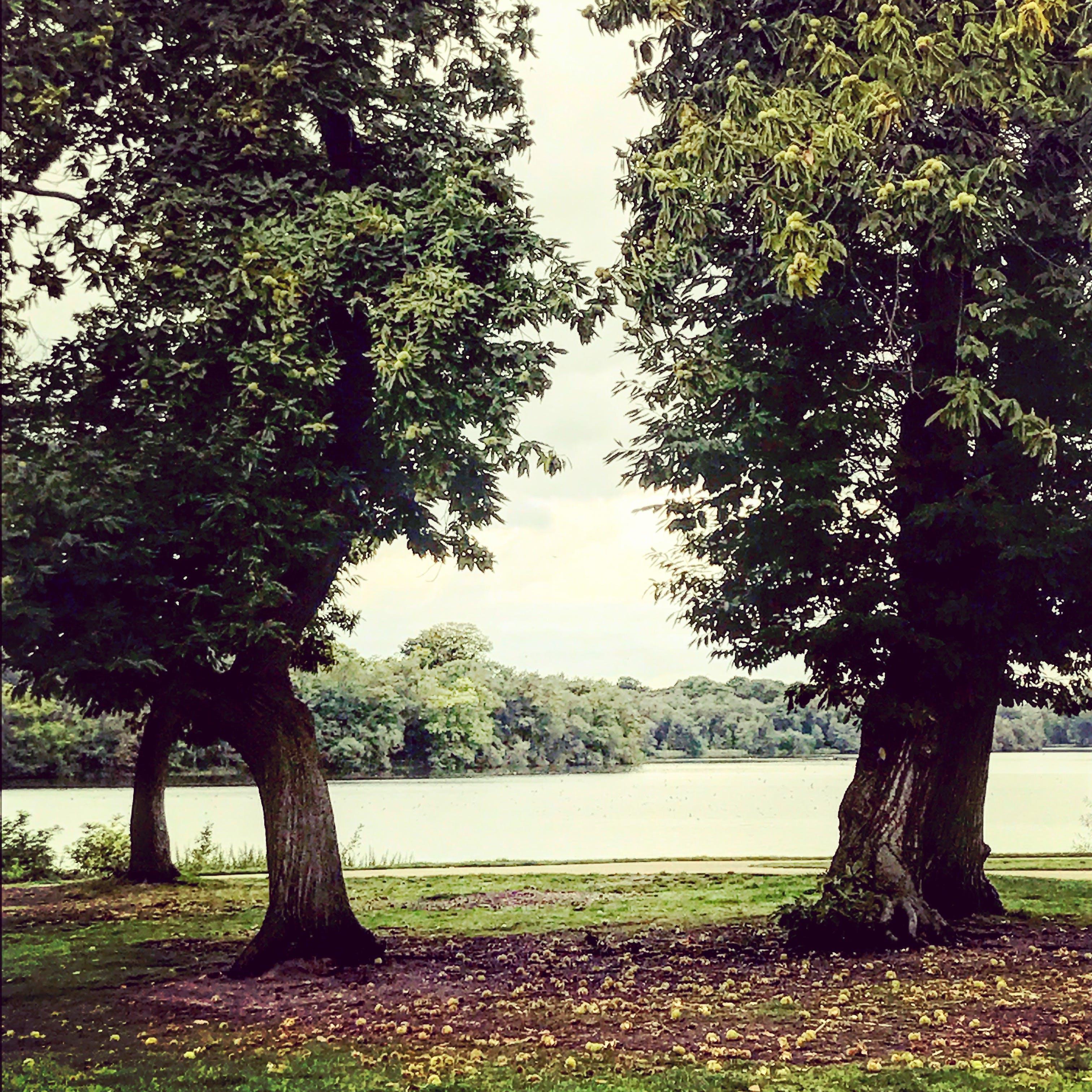 Free stock photo of autumn leaves, lake, sky, trees