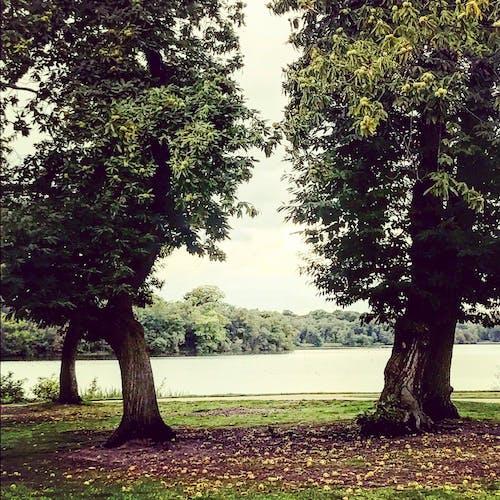 Foto d'estoc gratuïta de arbres, cel